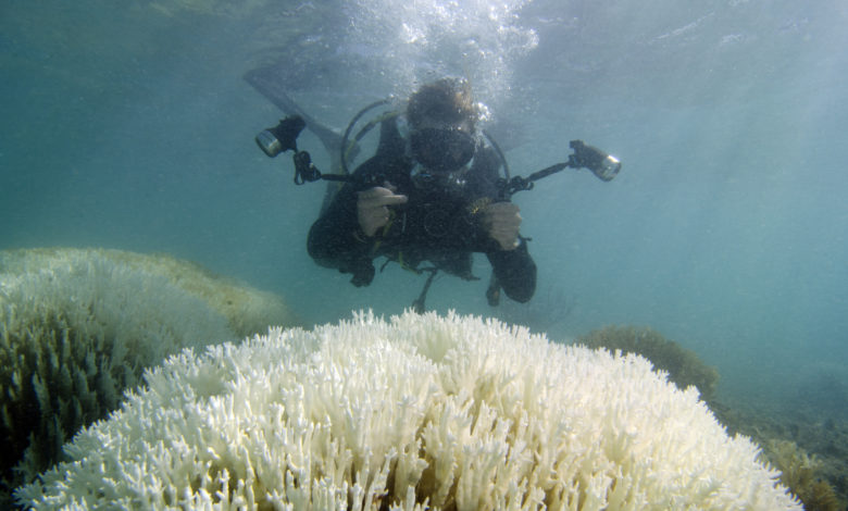 Photo of Coral Bleaching A Time Bomb If Nothing Is Done