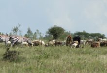 Photo of Empakasi Group Ranch: Conservation Land Stolen By Government